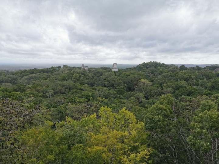 U džungli – Tikal iFlores